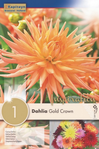 Bilde av Georgine, kaktus 'Gold Crown'